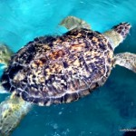 A Review of Gulf World Marine Park in Panama City, FL
