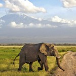 Rolling Around Nairobi, Kenya: A Wheelchair User's Travel Guide