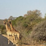 A Wheelchair Accessible Safari Guide to Kruger National Park