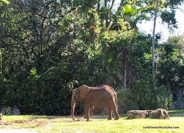 You can see elephants on the wheelchair accessible Kilimanjaro Safari