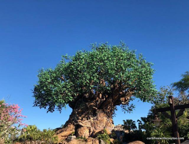 The Tree of Life at Animal Kingdom, Wheelchair accessible disney world, disney world wheelchair rental, disney disability pass, disney access pass, disney world accessibility